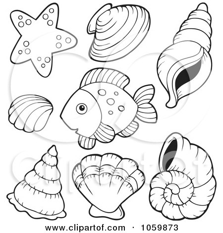 Clipart brown conch shell royalty free vector for Coloring pages of seashells