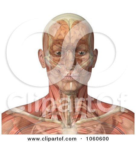 Royalty-Free CGI Clip Art Illustration of a 3d Male Head With Transparent Muscles With The Skull And Brain by Michael Schmeling
