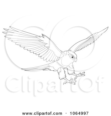Falcon Bird Clip Art