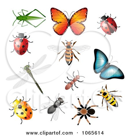 Clipart Colorful Insects - Royalty Free Vector Illustration by vectorace