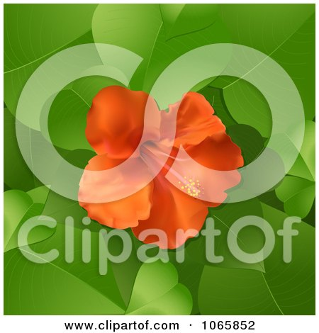 Clipart 3d Hibiscus Flower And