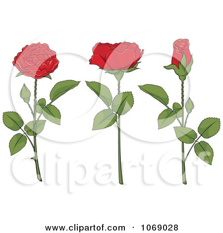 Red Roses And Stems  Posters, Art Prints