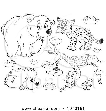 Clipart Outlined Bear Bobcat Hedgehog And Snake - Royalty Free Vector Illustration by visekart