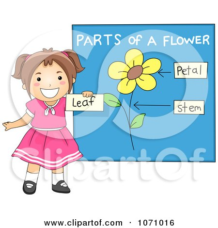 flower parts diagram
