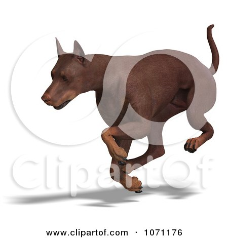 Clipart 3d Red Doberman Pinscher Dog Running 1 - Royalty Free CGI Illustration by Ralf61