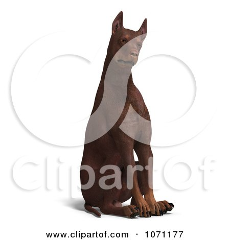 Clipart 3d Red Doberman Pinscher Dog Sitting With His Head Cocked - Royalty Free CGI Illustration by Ralf61