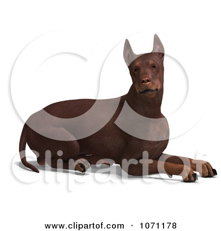 Clipart 3d Red Doberman Pinscher Dog Resting - Royalty Free CGI Illustration by Ralf61