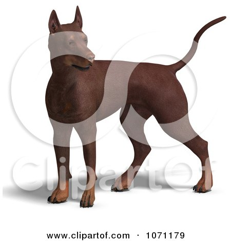 Clipart 3d Red Doberman Pinscher Dog Standing Alert - Royalty Free CGI Illustration by Ralf61