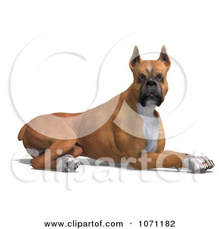 Clipart 3d Fawn And White Boxer Dog Resting - Royalty Free CGI Illustration by Ralf61