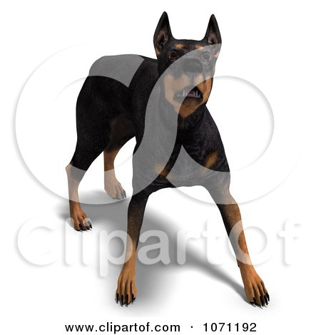 Clipart 3d Black Doberman Pinscher Dog In An Aggressive Stance - Royalty Free CGI Illustration by Ralf61