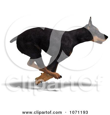 Clipart 3d Black Doberman Pinscher Dog Running 2 - Royalty Free CGI Illustration by Ralf61