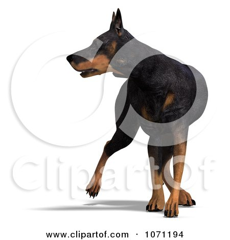 Clipart 3d Black Doberman Pinscher Dog Looking To The Side - Royalty Free CGI Illustration by Ralf61