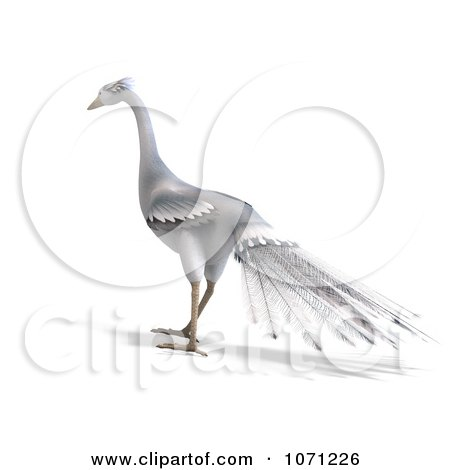 Clipart 3d White Peacock 6 - Royalty Free CGI Illustration by Ralf61