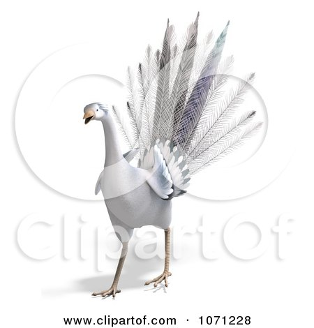 Clipart 3d White Peacock 2 - Royalty Free CGI Illustration by Ralf61