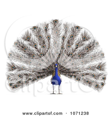 Clipart 3d Blue Peacock 1 - Royalty Free CGI Illustration by Ralf61