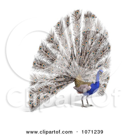 Clipart 3d Blue Peacock 5 - Royalty Free CGI Illustration by Ralf61
