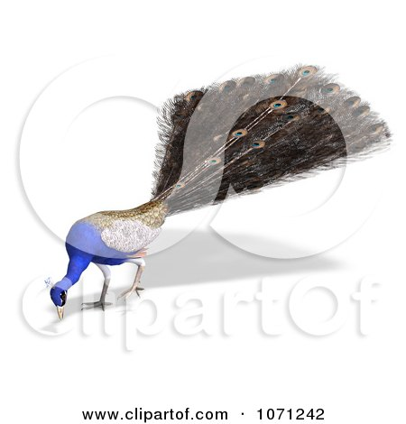 Clipart 3d Blue Peacock 7 - Royalty Free CGI Illustration by Ralf61