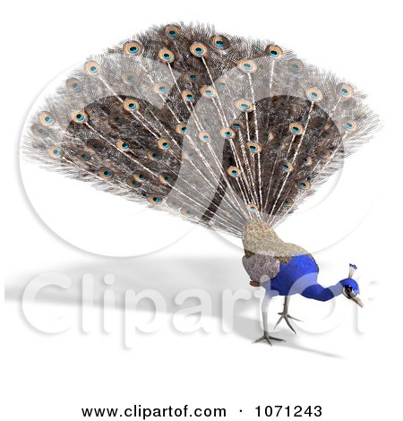Clipart 3d Blue Peacock 8 - Royalty Free CGI Illustration by Ralf61