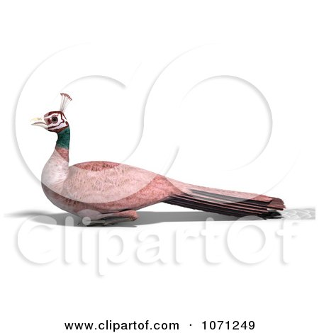Clipart 3d Female Peahen Peacock 4 - Royalty Free CGI Illustration by Ralf61