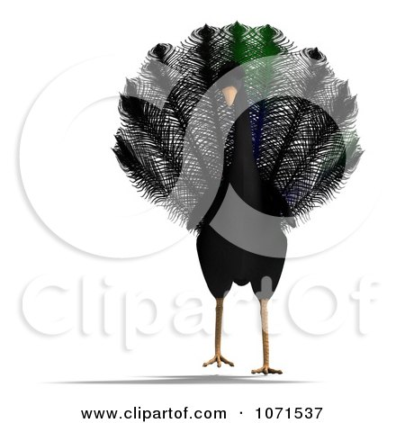 Clipart 3d Black Peacock 1 - Royalty Free CGI Illustration by Ralf61