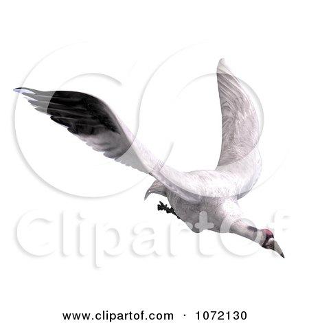 Clipart 3d White Crane Bird Flying 3 - Royalty Free CGI Illustration by Ralf61