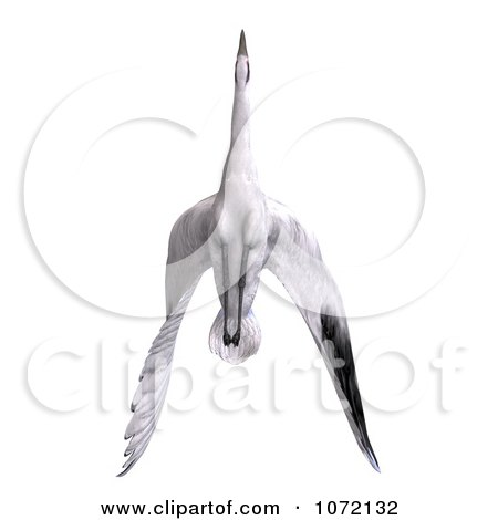 Clipart 3d White Crane Bird Flying 5 - Royalty Free CGI Illustration by Ralf61