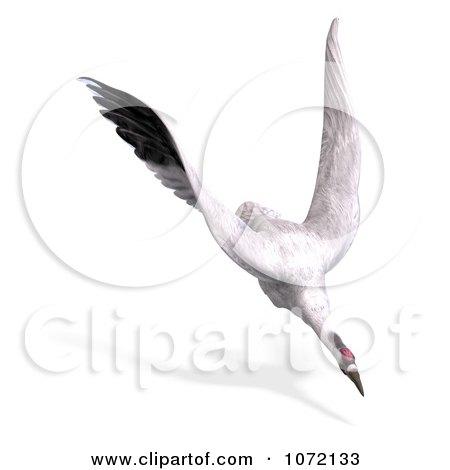 Clipart 3d White Crane Bird Flying 6 - Royalty Free CGI Illustration by Ralf61