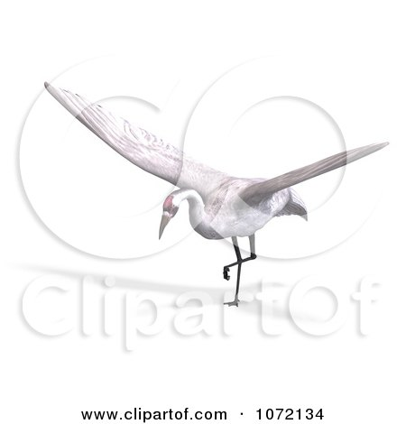 Clipart 3d White Crane Bird Ready To Take Off - Royalty Free CGI Illustration by Ralf61