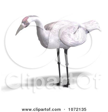 Clipart 3d White Crane Bird 1 - Royalty Free CGI Illustration by Ralf61