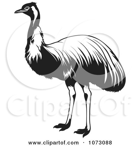 Clipart Black And White Ostrich Bird - Royalty Free Vector Illustration by dero