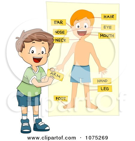 School Boy Tagging Body Parts On A Chart Posters Art Prints
