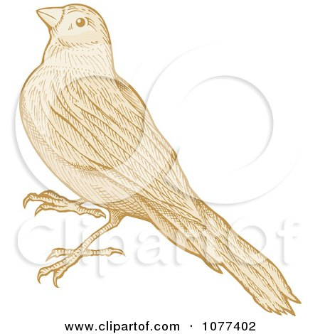 Clipart Sepia Sketched Bird - Royalty Free Vector Illustration by Any Vector