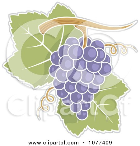Clipart Purple Grapes And Leaves- Royalty Free Vector Illustration by Any Vector