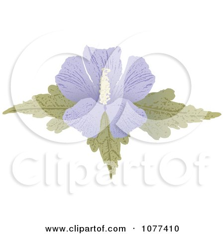 Clipart Purple Hibiscus Flower - Royalty Free Vector Illustration by Any Vector
