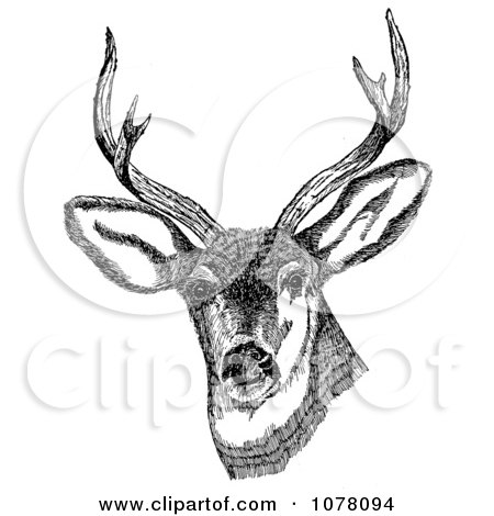 Deer With Antlers - Royalty Free Clip Art by JVPD