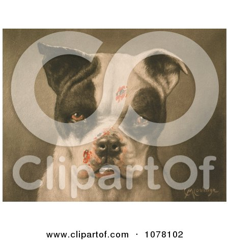 Tough Dog With Bloody Scratches - Royalty Free Historical Clip Art by JVPD
