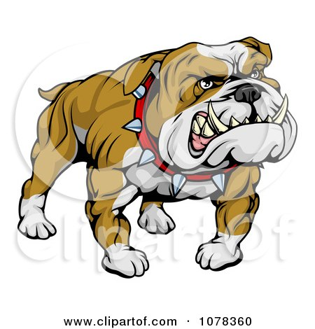 Clipart Mean And Muscular Bulldog Growling - Royalty Free Vector Illustration by AtStockIllustration