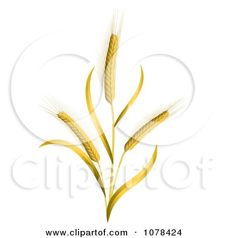 Clipart 3d Ears Of Wheat Stalks - Royalty Free Vector Illustration by Oligo