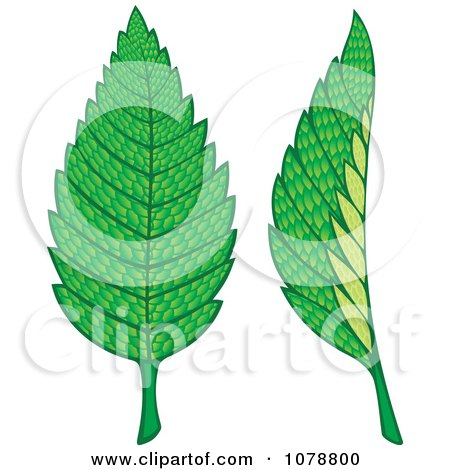 Clipart Two Mint Leaves - Royalty Free Vector Illustration by Any Vector