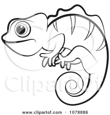 Clipart Outlined Chameleon Lizard - Royalty Free Vector ...
