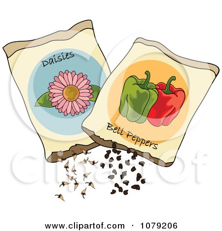 Clipart Packets Of Daisy Flower And Bell Pepper Seeds - Royalty Free Vector Illustration by Pams Clipart