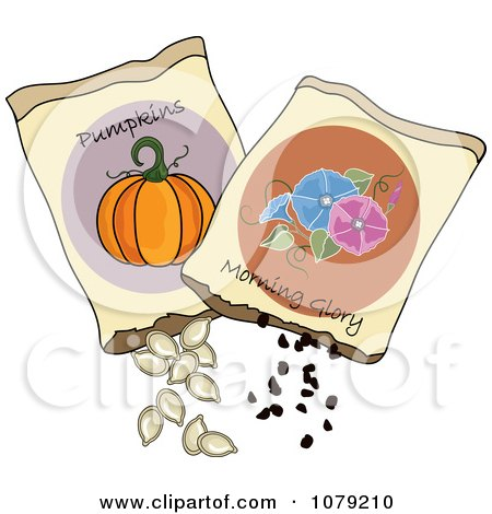 Clipart Packets Of Morning Glory And Pumpkin Seeds - Royalty Free Vector Illustration by Pams Clipart