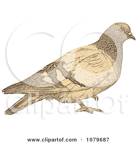 Clipart Sepia Dove - Royalty Free Vector Illustration by Andrei Marincas