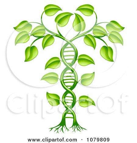 3d Green DNA Crop Gene Modification Helix Plant Posters, Art Prints