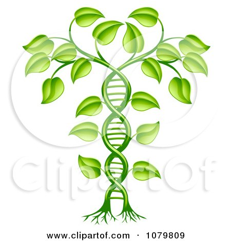Clipart 3d Green DNA Crop Gene Modification Helix Plant - Royalty Free Vector Illustration by AtStockIllustration