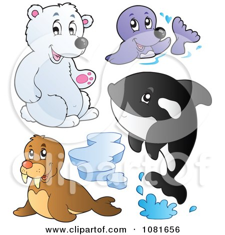 Clipart Polar Bear Seal Walrus And Orca - Royalty Free Vector Illustration by visekart