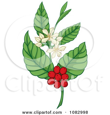 Clipart Coffee Plant With Berries And Flowers - Royalty Free Vector Illustration by Any Vector