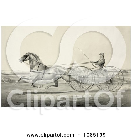 Harness Racer Driving A Trotting Horse - Royalty Free Stock Illustration by JVPD