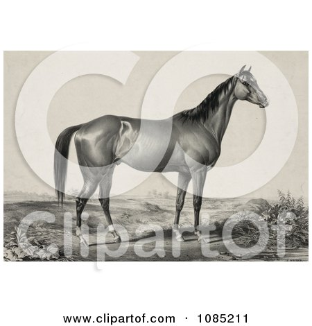 Strong Horse Standing And Facing To The Right - Royalty Free Stock Illustration by JVPD