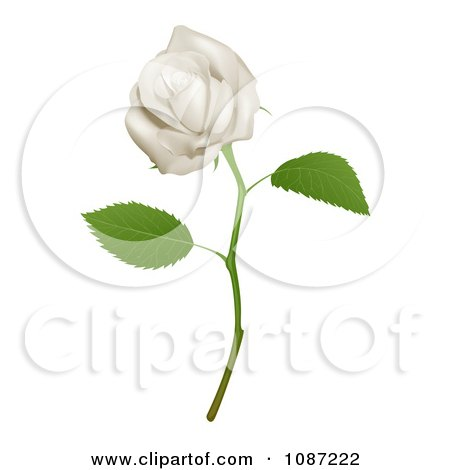 Clipart 3d Goregous White Long Stemmed Rose - Royalty Free Vector Illustration by AtStockIllustration